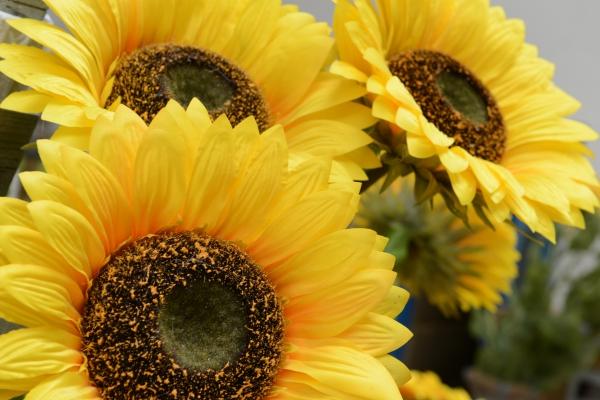 Zářivé slunečnice